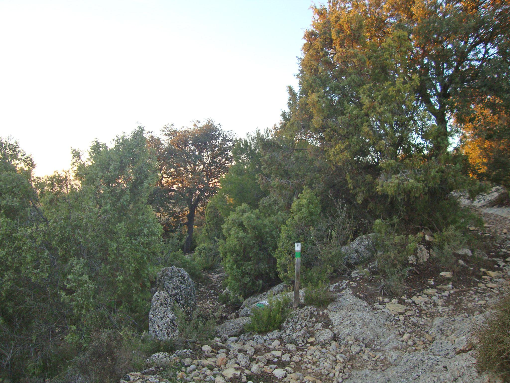 Desvío senda Cova del Molí